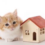 ペット共存賃貸マンションで差別化を狙え