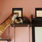 猫と暮らせる賃貸住宅はビジネス拡大のチャンス?